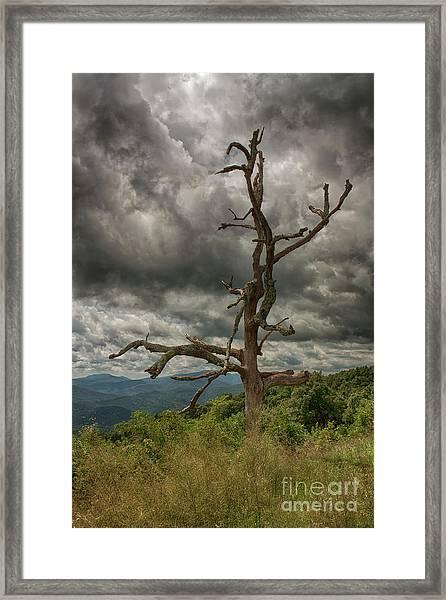 Beautifully Dead Framed Print