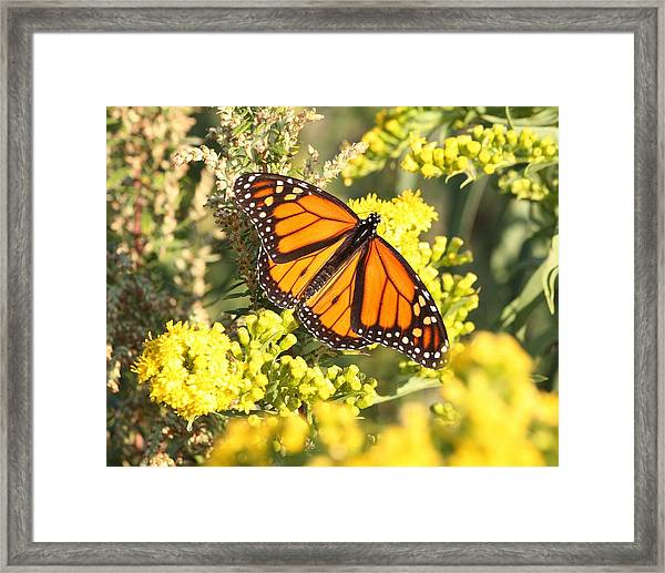 Beauty Defined Framed Print