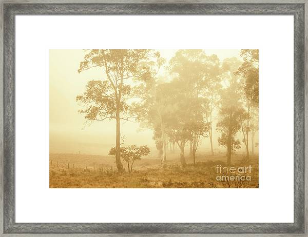 Beauty In A Forest Fog Framed Print