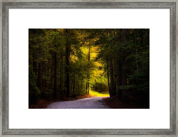 Beauty In The Forest Framed Print