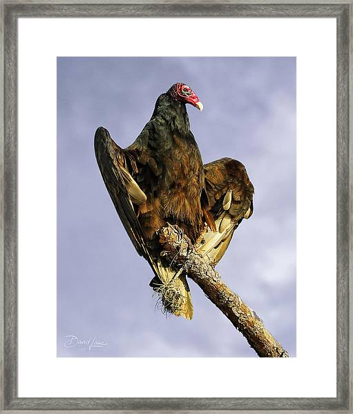 Framed Print featuring the photograph Beauty Is Skin Deep by David A Lane