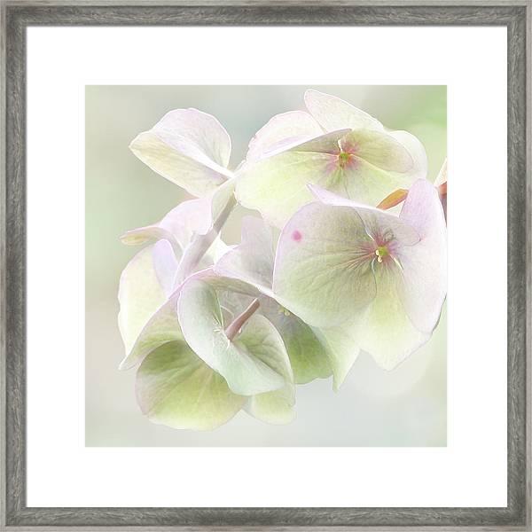 Beauty Mark Framed Print
