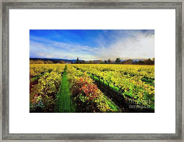 Beauty Over The Vineyard Framed Print