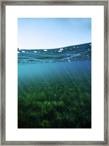 Beauty Under The Water Framed Print