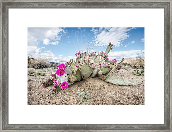 Beavertail Cactus Framed Print