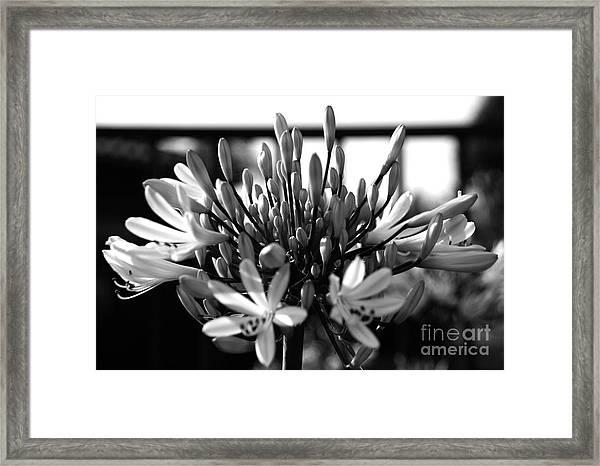 Becoming Beautiful - Bw Framed Print