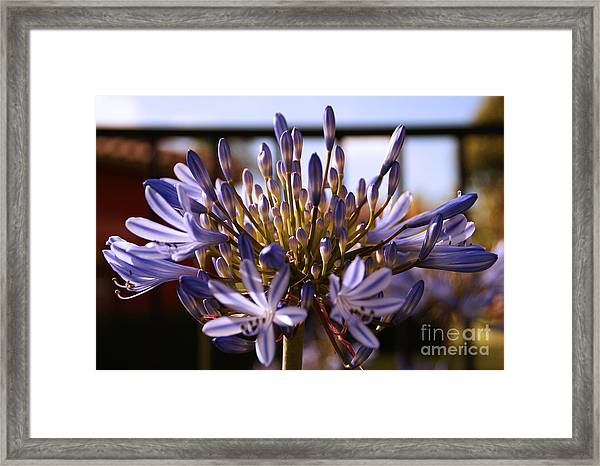 Becoming Beautiful Framed Print