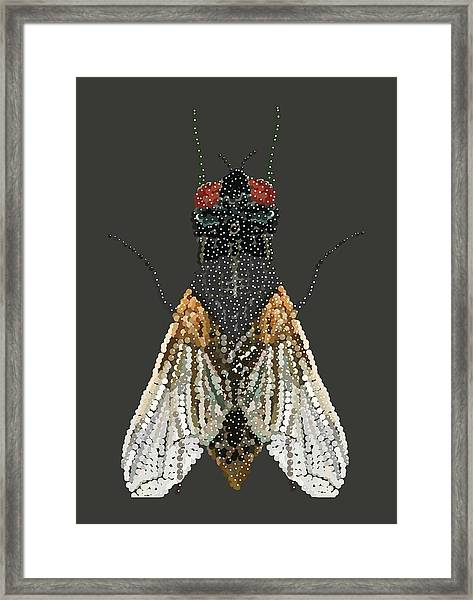 Bedazzled Housefly Transparent Background Framed Print