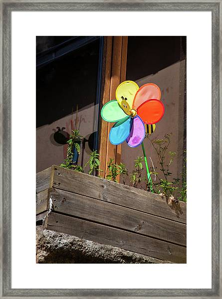 Bee A Wind Spinner? Framed Print
