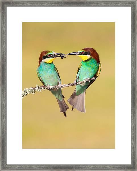 Bee-eater Valentine Heart Framed Print