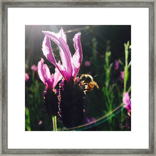 Bee Illuminated Framed Print