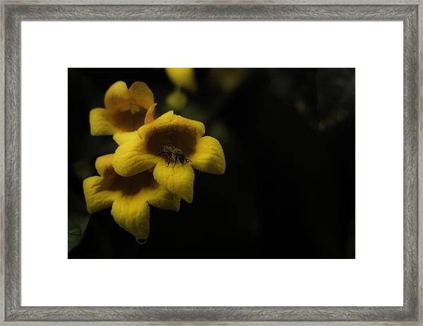 Bee In A Trumpet Framed Print