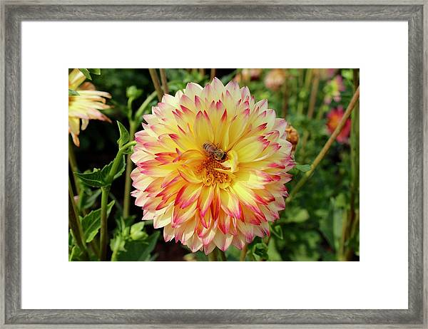 Bee In The Middle Framed Print