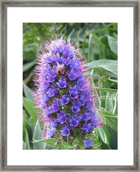 Bee On Blue Framed Print