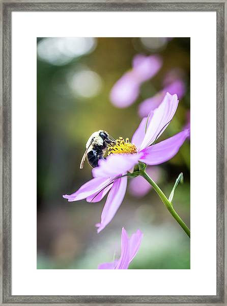 Bee On Flower Framed Print