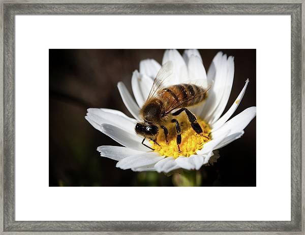 Bee On The Flower Framed Print