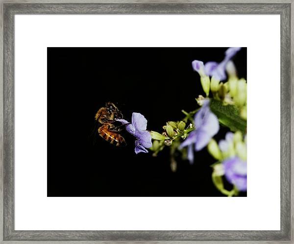 Bee Portrait Framed Print