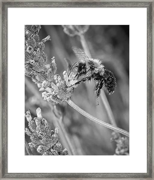Bee Works Lavender Framed Print