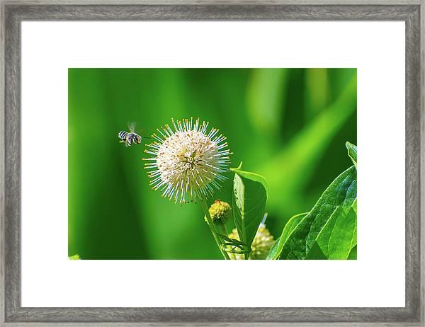 Bee World Framed Print