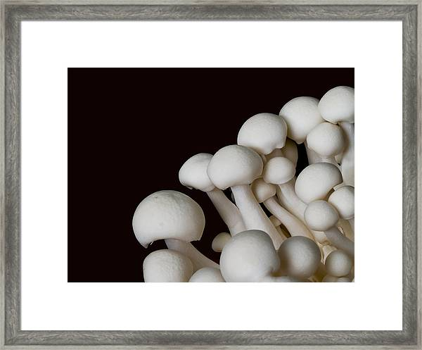 Beech Mushrooms Framed Print