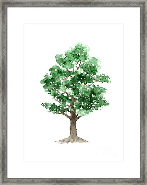 Beech Tree Minimalist Watercolor Painting Framed Print