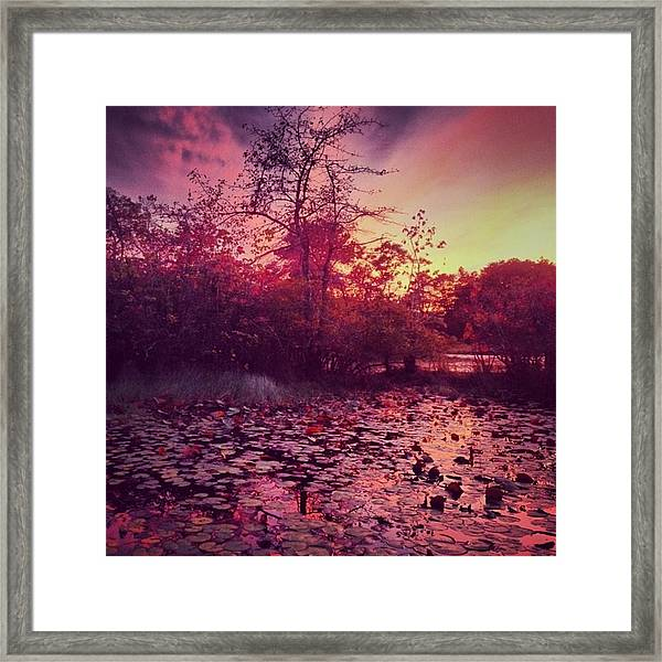 #beechforest #provincetown #sunset Framed Print by Ben Berry
