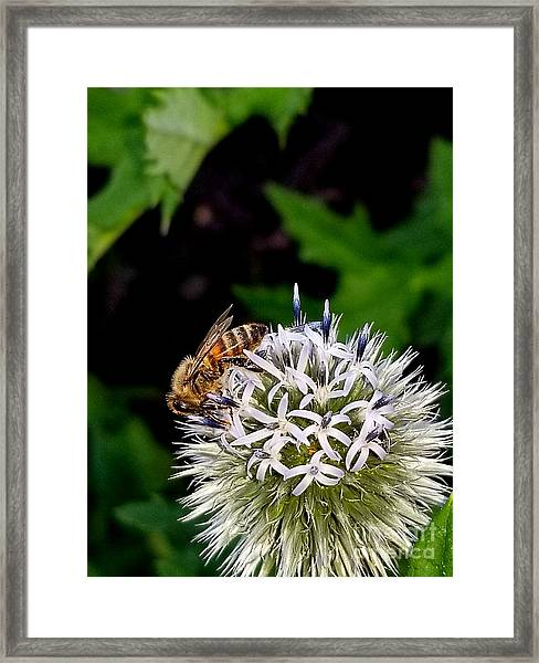 Beeing Seen Framed Print