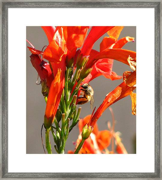 Day In A Life Of A Bee Framed Print