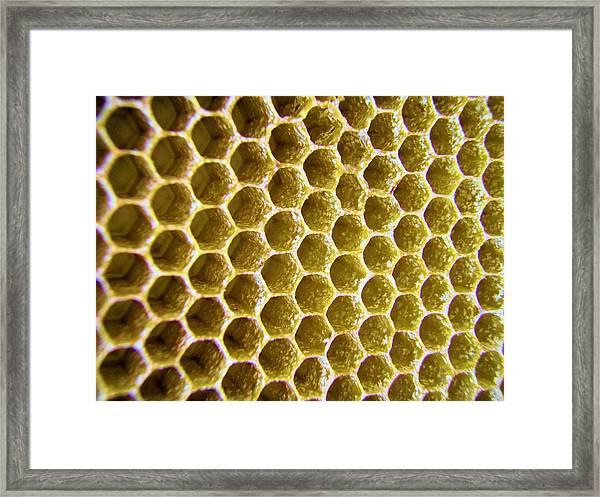 Bee's Home Framed Print
