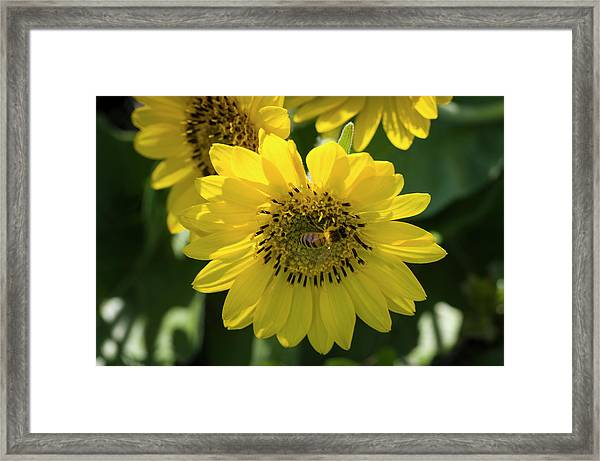 Bee's Work Is Never Done Framed Print