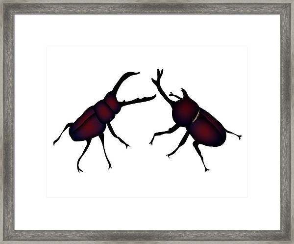 Beetle And Stag Beetle Framed Print