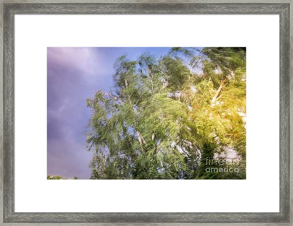Before The Storm Framed Print