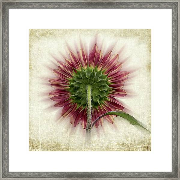 Framed Print featuring the photograph Behind The Sunflower by Patti Deters