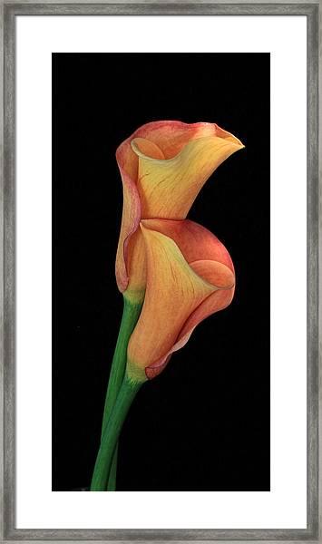Bella Fiore Framed Print