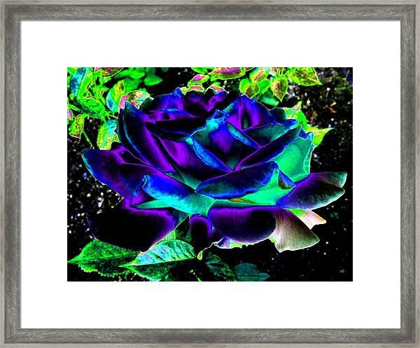 Bella Flora 4 Framed Print