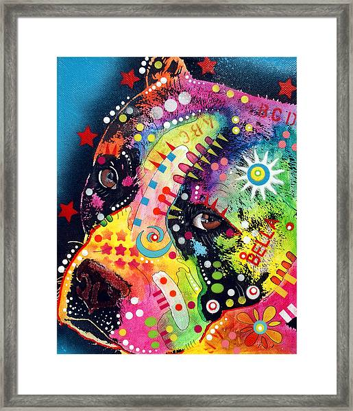 Bella Pitbull Framed Print by Dean Russo Art