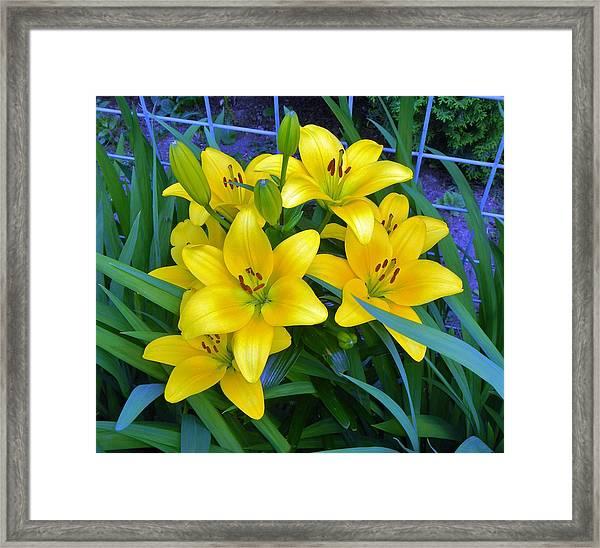 Bellingham Blooms Framed Print
