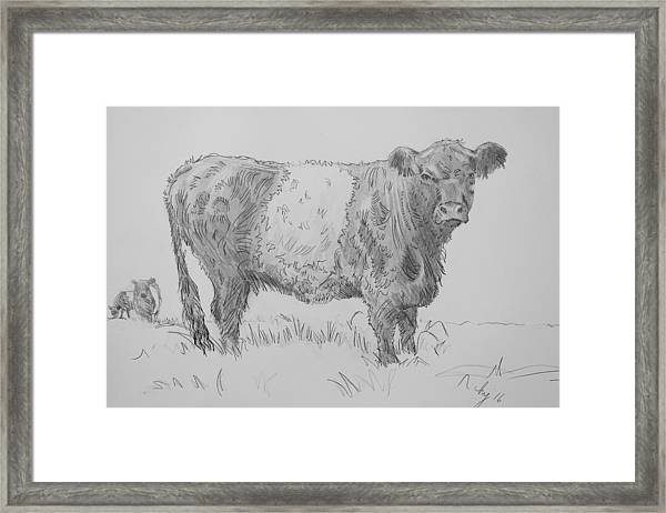 Belted Galloway Cow Pencil Drawing Framed Print