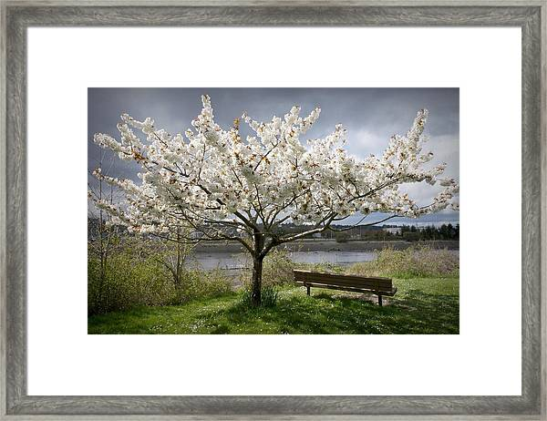 Bench And Blossoms Framed Print