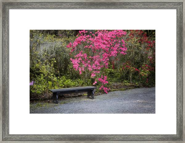 Bench In Azalea Garden Framed Print