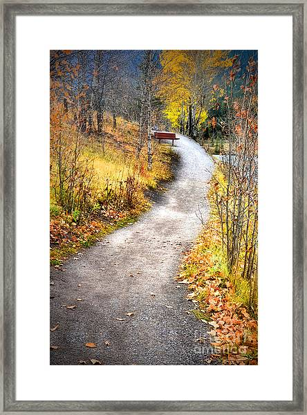 Bench On A Hill Framed Print
