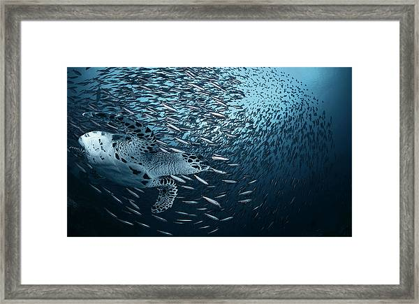 Bend Framed Print by Andrey Narchuk