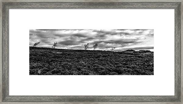 Bending To The Wind Framed Print