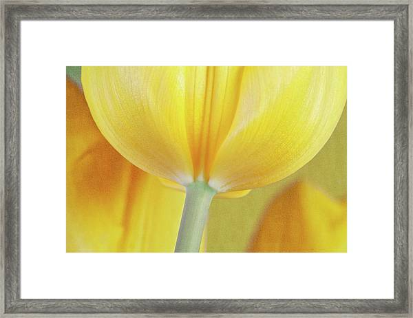 Beneath The Yellow Tulip Framed Print
