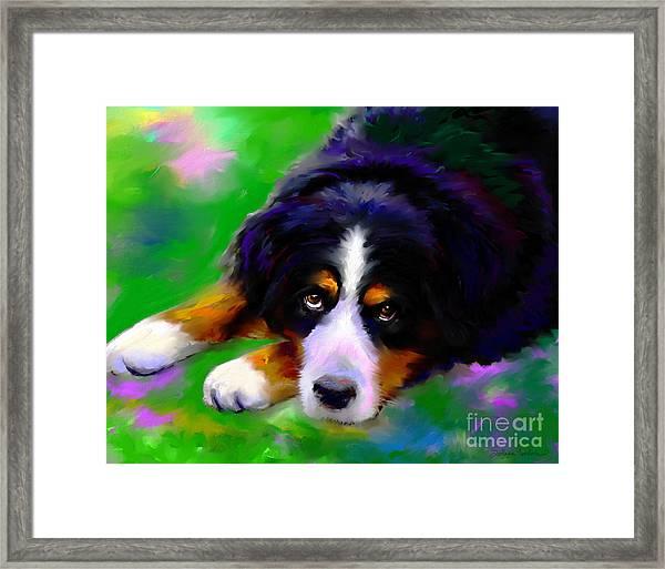Bernese Mountain Dog Portrait Print Framed Print