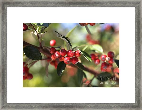 Berry Delight Framed Print
