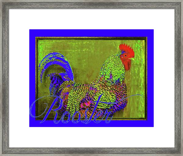 Bert The Rooster Framed Print