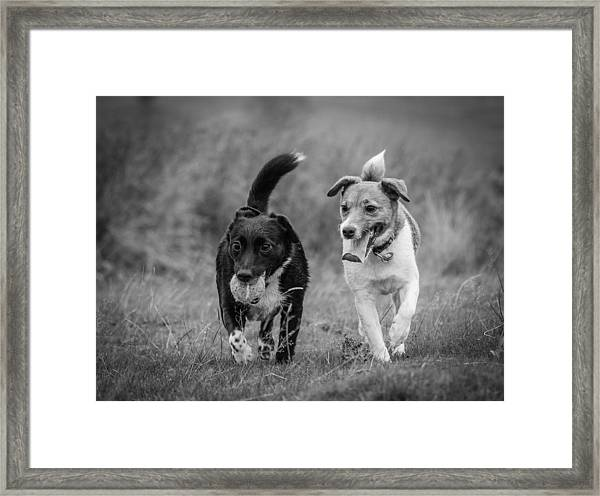 Framed Print featuring the photograph Best Buddies by Nick Bywater