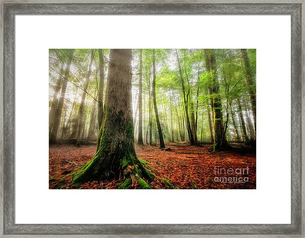 Between The Light And The Shadows Framed Print