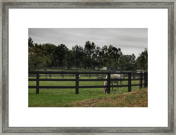 1004 - Beyond The Fence White Horse Framed Print